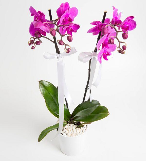 asaletli-mor-2-dal-orkide-at2360-1-8d3f76bb819838a-fb13f90f