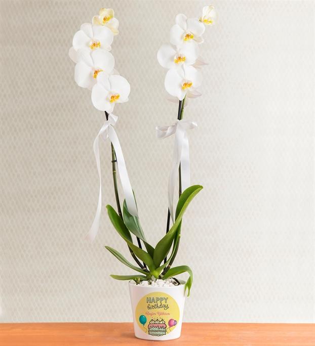 kisiye-ozel-saksida-cift-dal-phalaenopsis-orkide-at3447-1-8d43649a515925f-2a63bbed