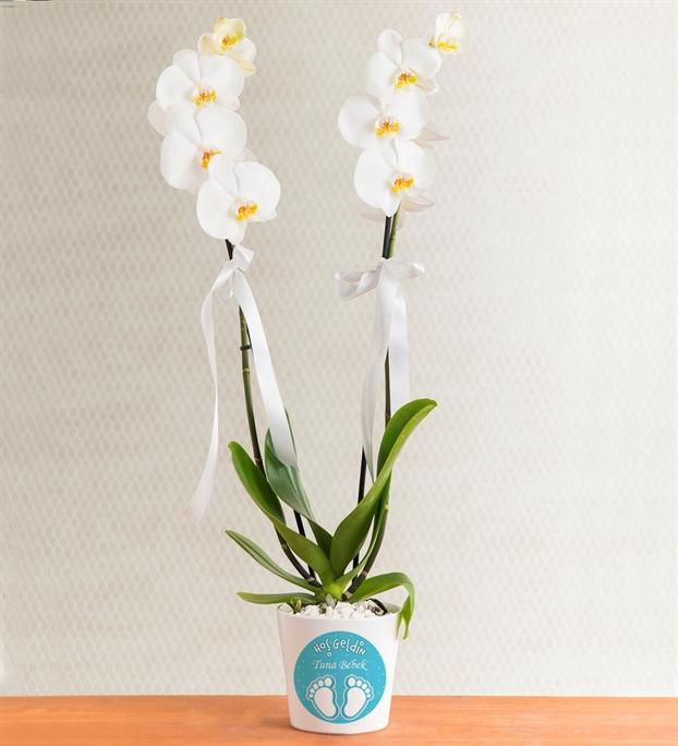 kisiye-ozel-saksida-cift-dal-phalaenopsis-orkide-at3447-1-8d43649a6577028-b2e85751