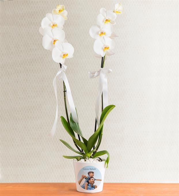 kisiye-ozel-saksida-cift-dal-phalaenopsis-orkide-at3447-1-8d46497ee54e68c-5860d045